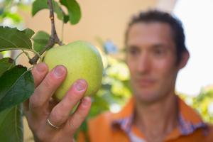 Frucht-Ernte in der Likör-Genusswerkstatt